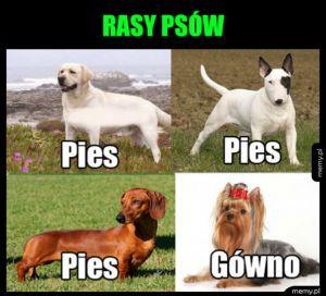 Jak rozpoznać rasy psów