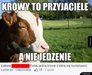 Krowy to przyjaciele