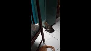 Sprytny kotek