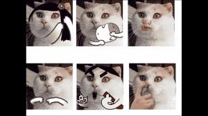 Wszędzie memy z kotami