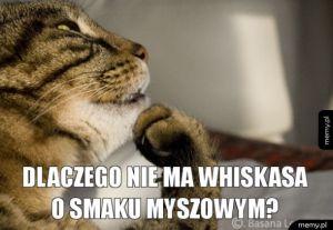 Kocie rozkminy