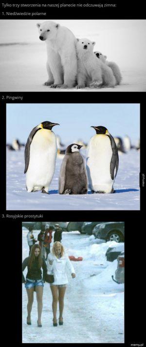 Tylko trzy stworzenia nie odczuwają zimna