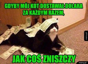 Bogaty koteł