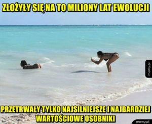 Milion lat ewolucji