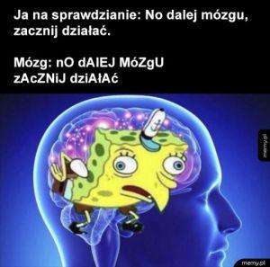 No dalej mózgu