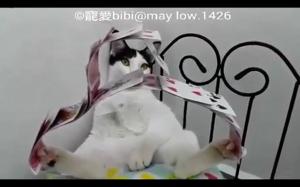 Wyjątkowo spokojny koteł