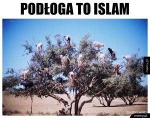 Podłoga to islam