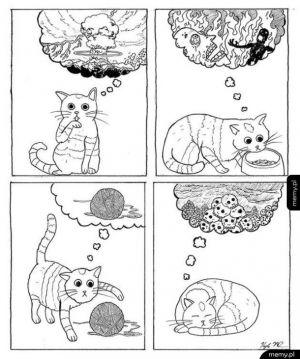O czym myślą kotki