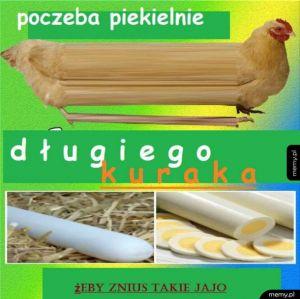 Długa kura