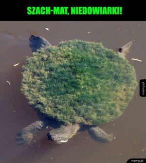 Szach-mat