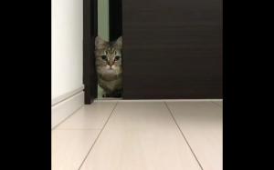 Wołałeś mnie?