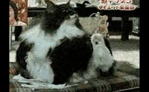 Biedny kotek ma za krótkie łapki