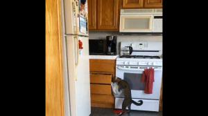 """""""Gdzie ja wsadziłem tuńczyka?"""""""
