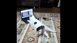 Kocie video