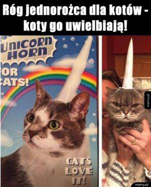 Koty to kochają!