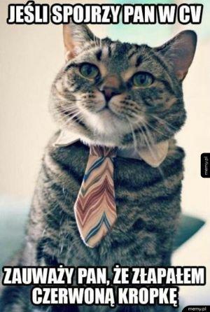 Koteł na rozmowie o pracę