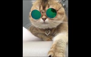 Ten kot ma więcej kasy niż ty