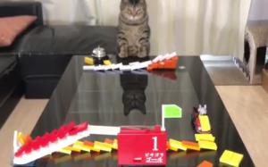 Kotek i domino