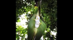Białe nietoperze