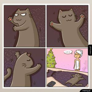 Typowy kotek