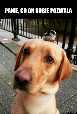 Pies i ptak