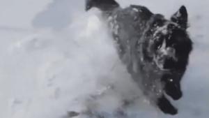 Nurkowanie w śniegu