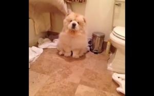 Majestatyczny pies