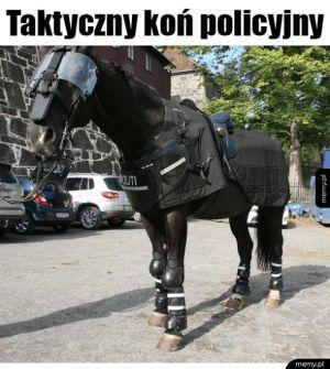 Koń taktyczny