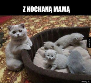 Piękne kotki