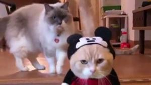 Zabawa w kotka i myszkę