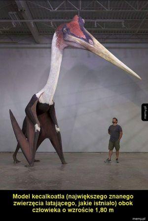 Wielki ptak