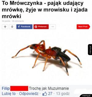 Muzułmański pająk