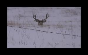 Bambi, coś ci spadło!