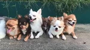 Wielka, szczęśliwa rodzina
