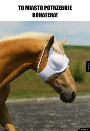 Konieł
