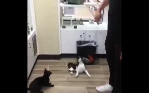Koty są najlepsze