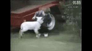 Koza wygrała!