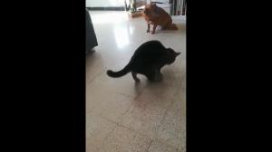 Kot.exe błąd krytyczny