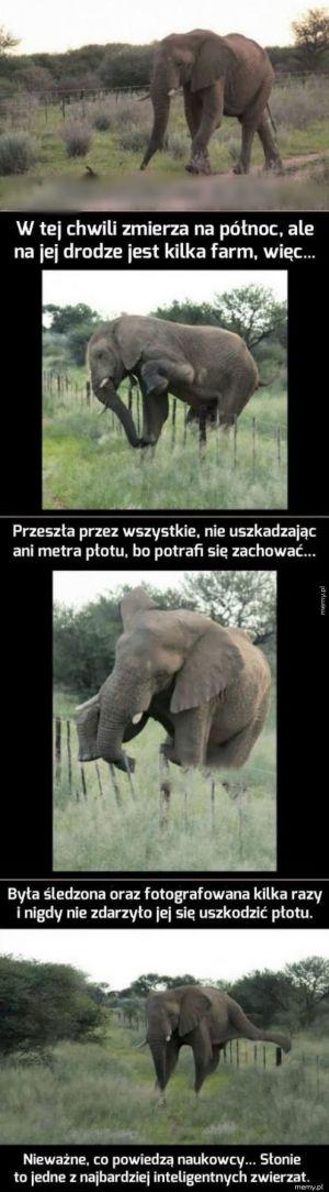Jest sobie słonica