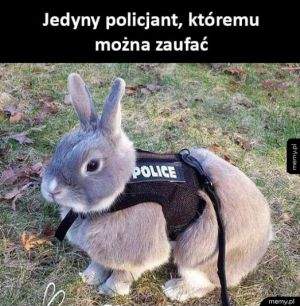 Karm the policję