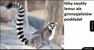Niby zwykły lemur