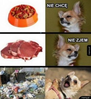 Typowy pies
