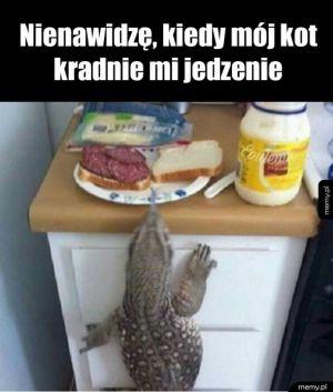 Kocie odejdź