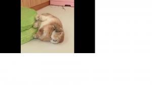 Zasypiający króliczek