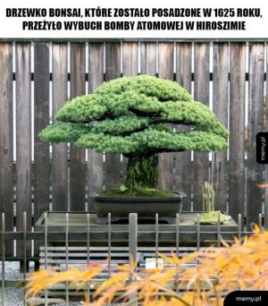 Niezniszczalne Bonsai