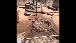 Szalone makaki