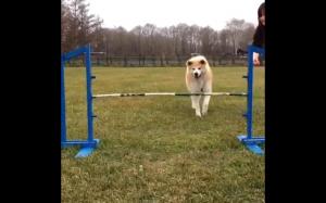 Skacz!
