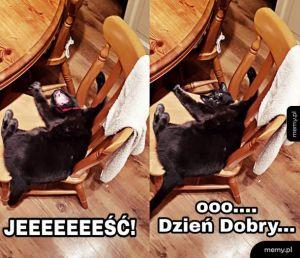 Kiedy rano spotykasz kota...