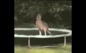 Kangur na trampolinie