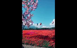 Kraina kwiatów